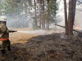 Лесные пожары в Ревде