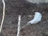 В Дегтярске найден труп новорожденного ребенка в мешке