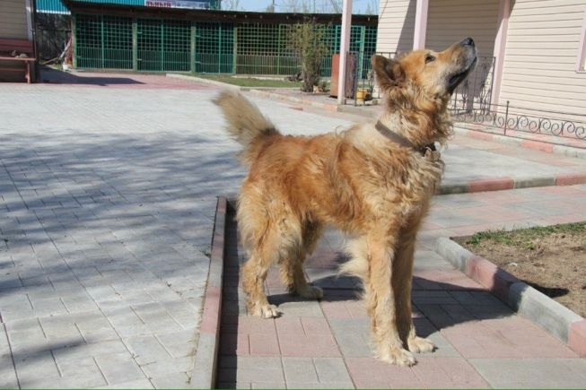 pes_rozysk-1