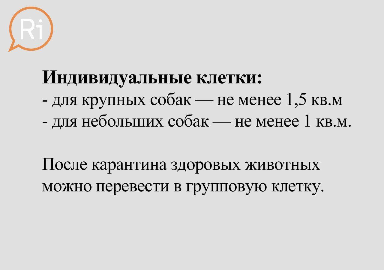 priut_slaid (13)