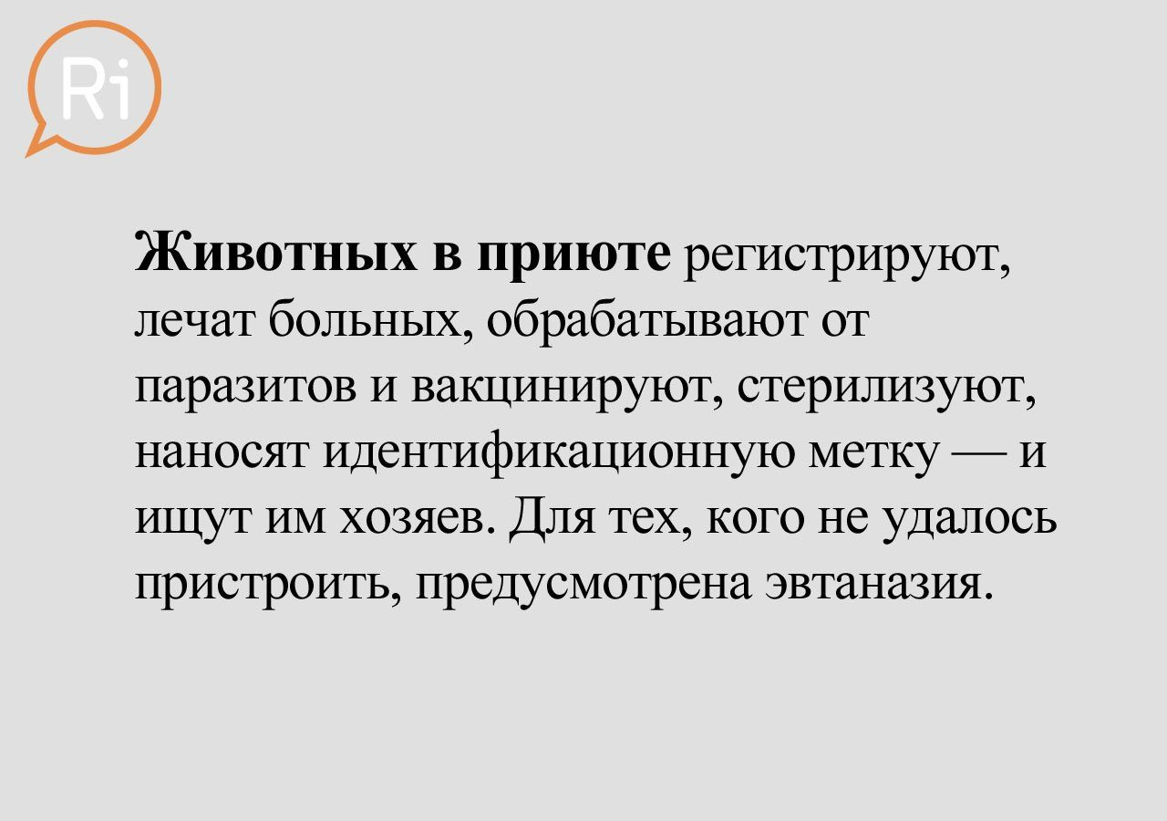 priut_slaid (15)