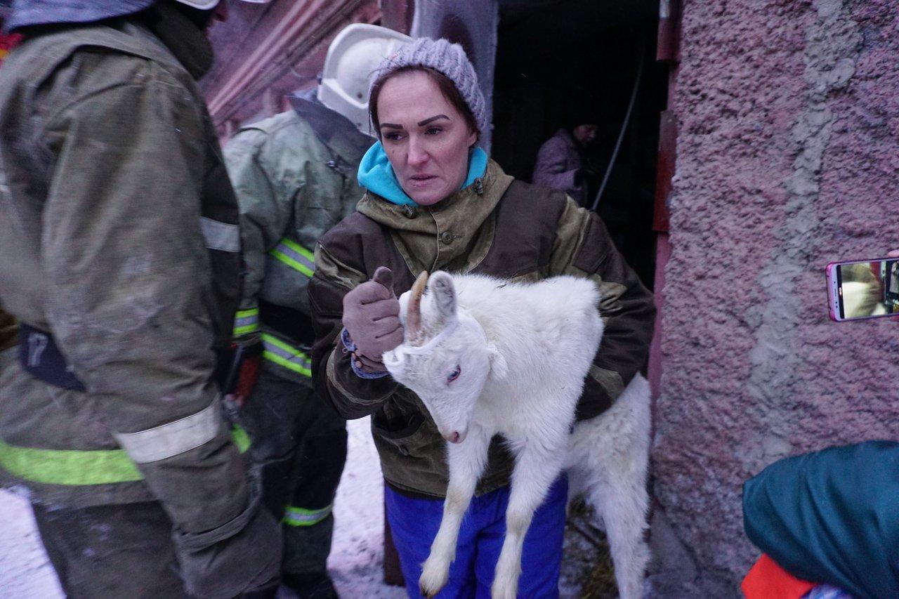 Mariya-Ganieva-spasaet-kozu